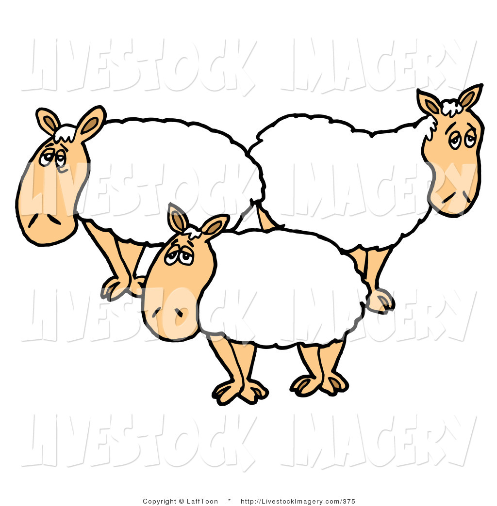 Royalty Free Stock Livestock Designs of Lambs.
