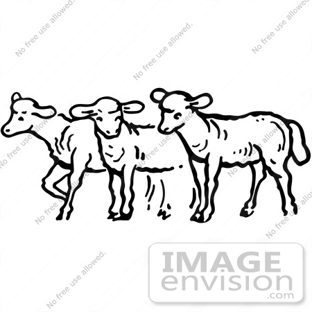 Clipart Of A Group Of Sheep In Black And White.