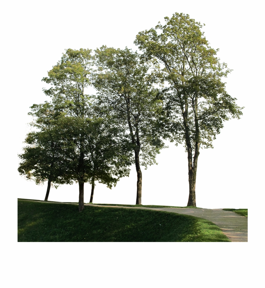 Big Trees Group, HD Png Download (1552554 ).