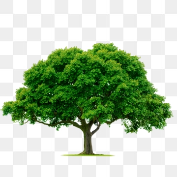 Tree PNG Images, Download 55,445 Tree PNG Resources with.