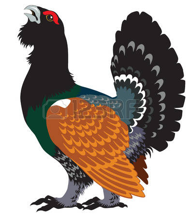 267 Grouse Cliparts, Stock Vector And Royalty Free Grouse.
