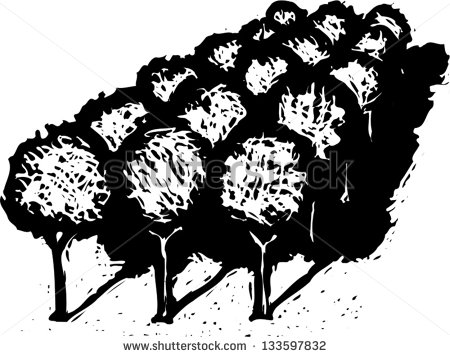 Black And White Vector Illustration Of Grove Of Fruit Trees Or.
