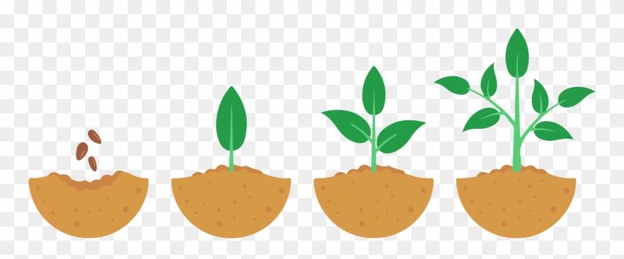 Seeds Take Time To Grow.