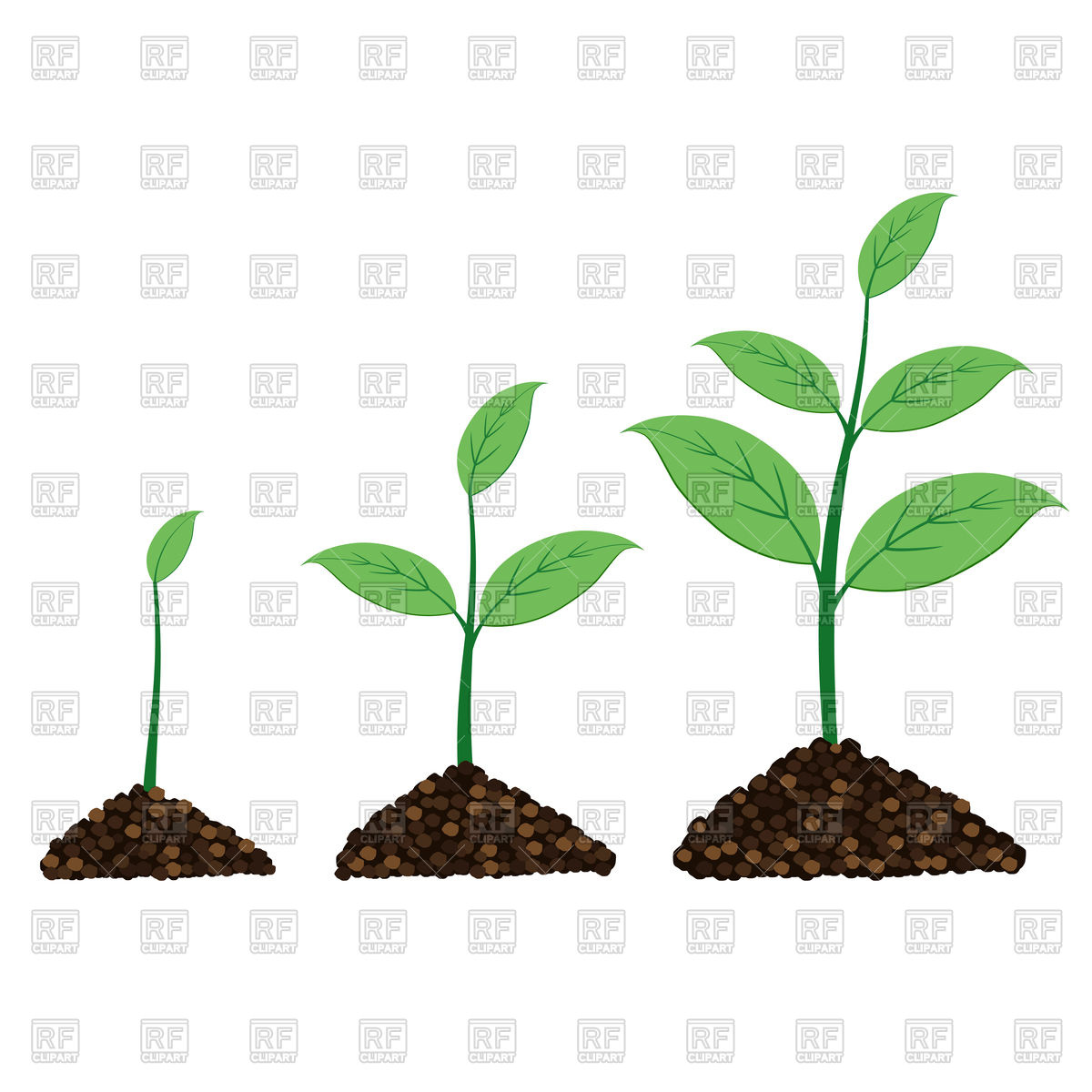 Plant grow up in moment Stock Vector Image.