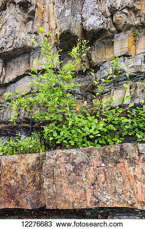 Stock Photo of Plants grow out of rocks atop Whirlpool Canyon, on.