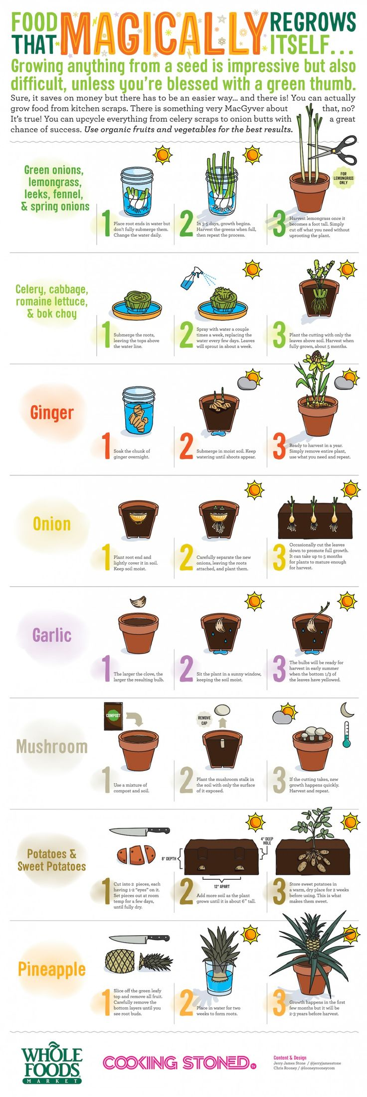 1000+ ideas about Regrow Vegetables on Pinterest.