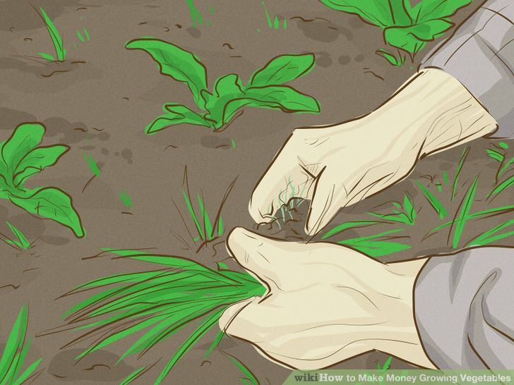 3 Ways to Make Money Growing Vegetables.