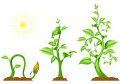 Clipart of Growing Plant Stages k6729221.