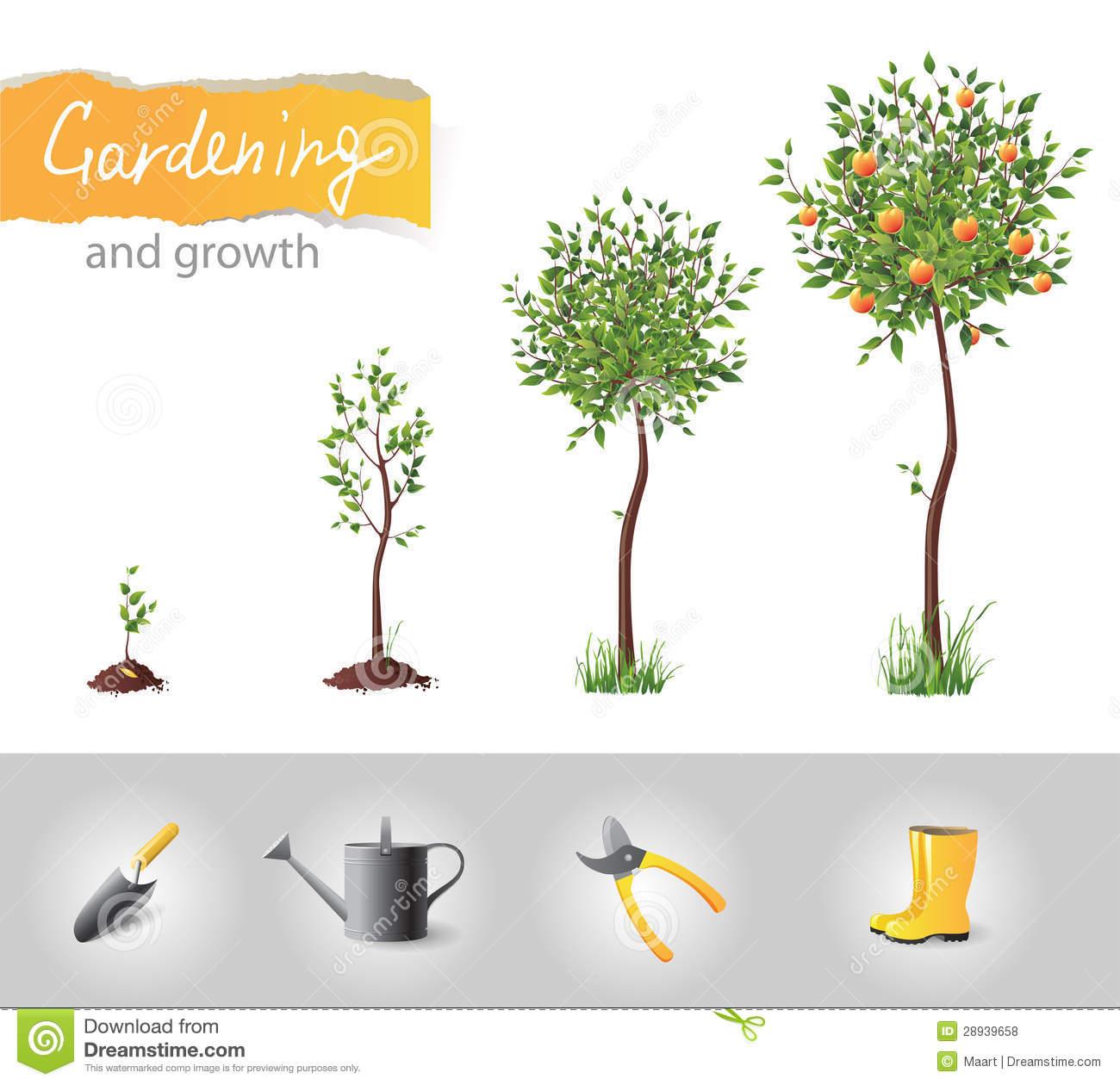 Growing Stock Illustrations.