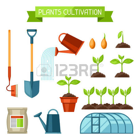 2,902 Seed Growing Stock Illustrations, Cliparts And Royalty Free.