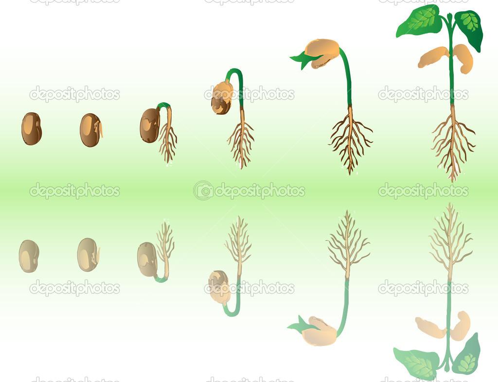 Plant growing — Stock Vector © jelen80 #1998037.