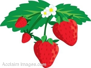 Clip Art Of A Strawberry Plant.