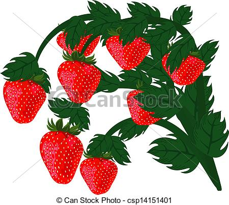 Strawberry plant clipart.