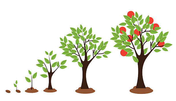 Best Growing Tree Illustrations, Royalty.