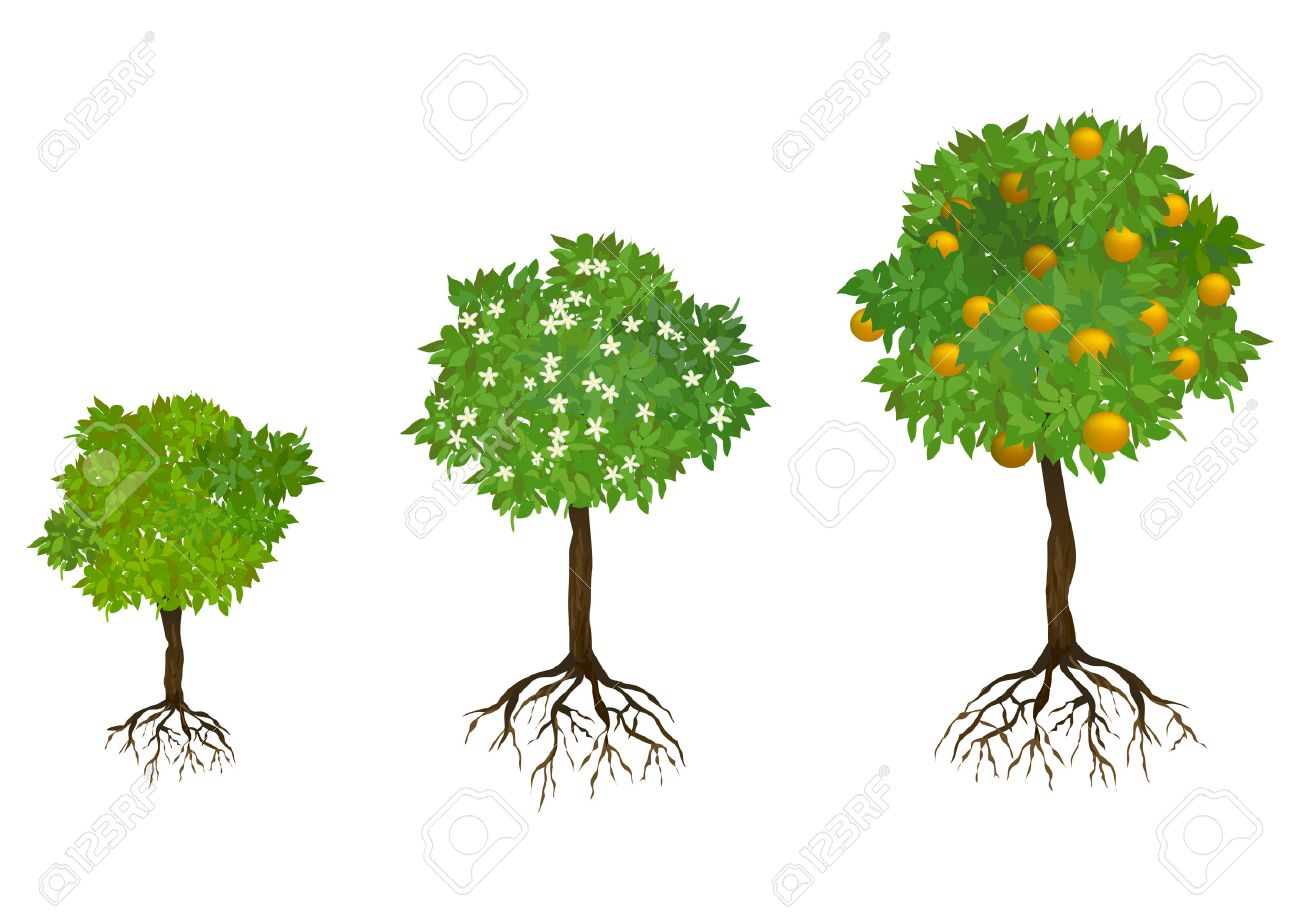 growing trees with roots. vector illustration.