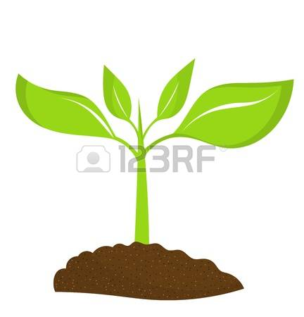 3,177 Seed Growing Stock Illustrations, Cliparts And Royalty Free.