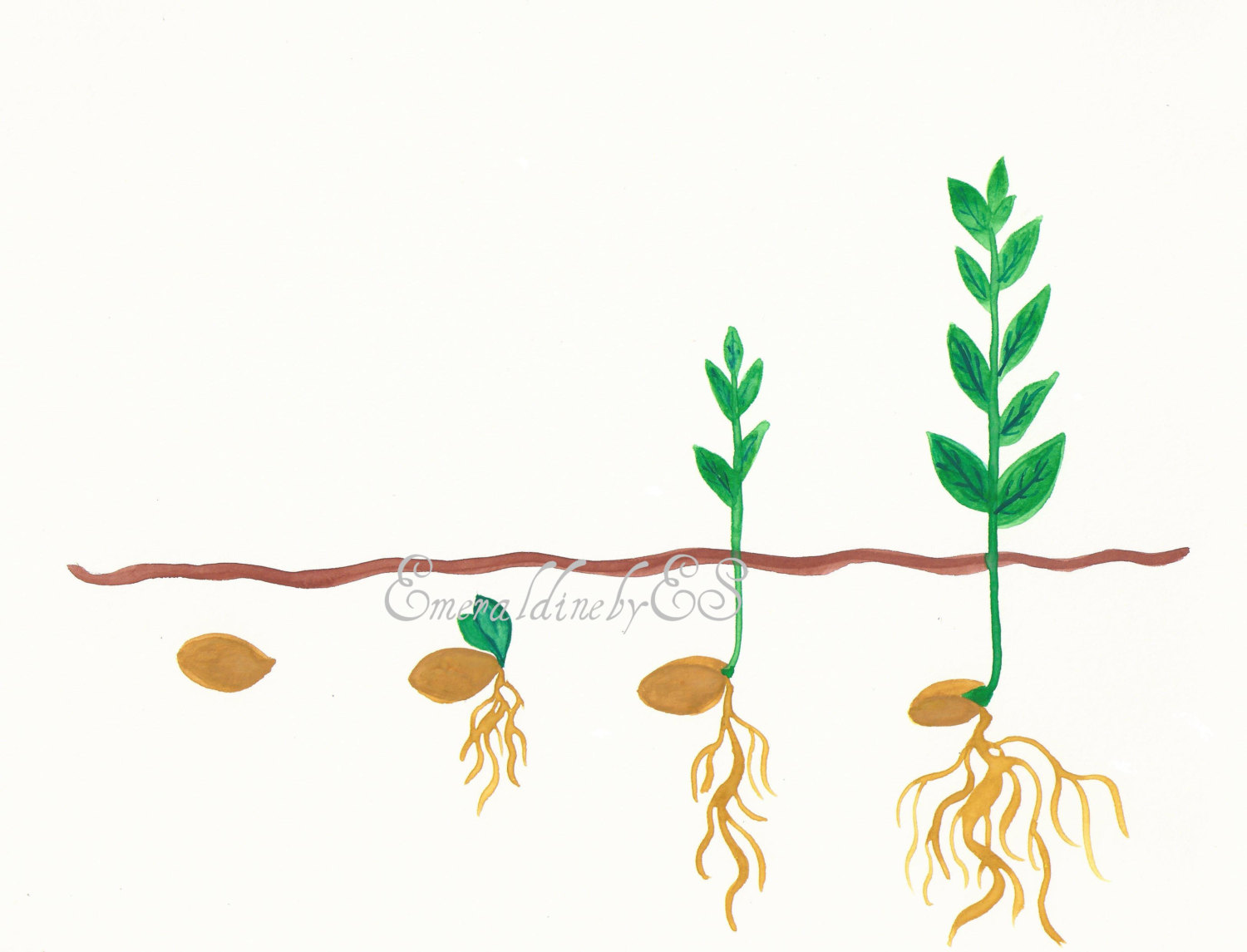 Seed Growing Clipart.