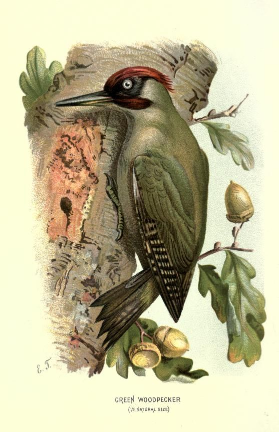 1000+ images about Zoology: Birds on Pinterest.