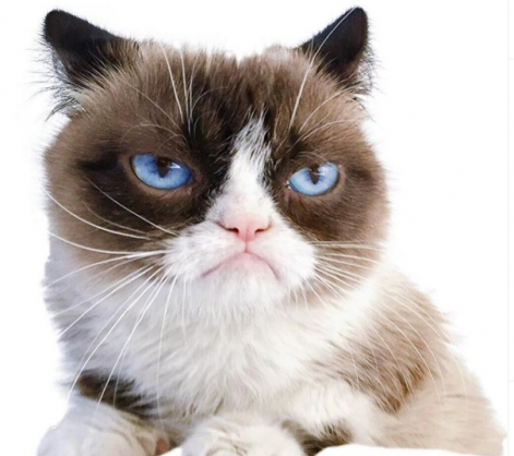 Social media users mourn the death of Grumpy Cat.