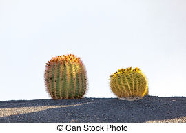 Stock Photographs of Cactuses in Lanzarote island, Spain.
