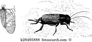 Gryllidae Clip Art Illustrations. 5 gryllidae clipart EPS vector.