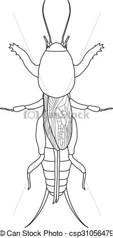 Vectors Illustration of Gryllotalpidae. European mole cricket.