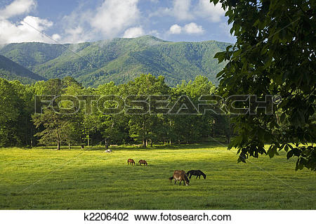 Stock Photo of Horses, Cades Cove, GSMNP, TN k2206402.
