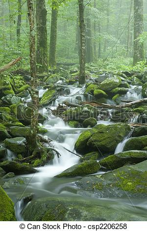 Pictures of Stream, Spring Landscape, GSMNP.