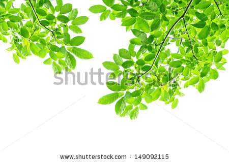 Tree branch and leaves free stock photos download (15,096 Free.