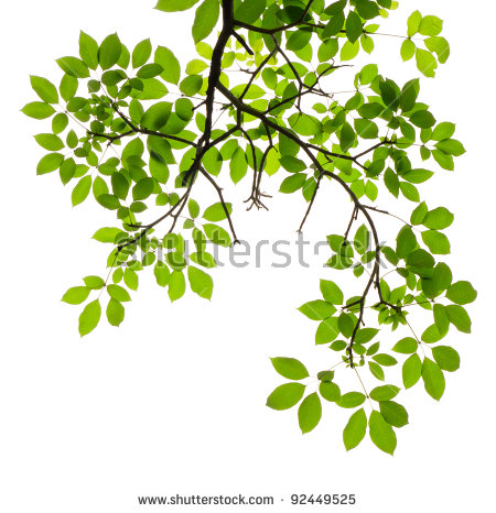 Tree branch white background free stock photos download (25,173.