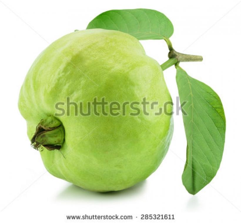 Clipart guava fruit.