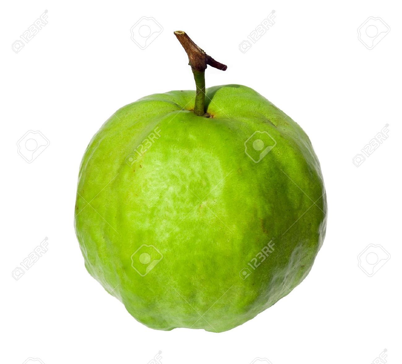 Guava images clip art.
