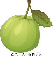 Guava Illustrations and Clip Art. 393 Guava royalty free.