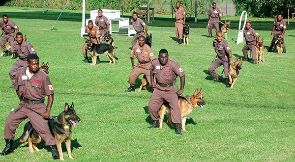 Guard Dog Group.