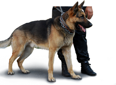 Hides Security Services Ltd with Guard Dog Security Services Ltd.