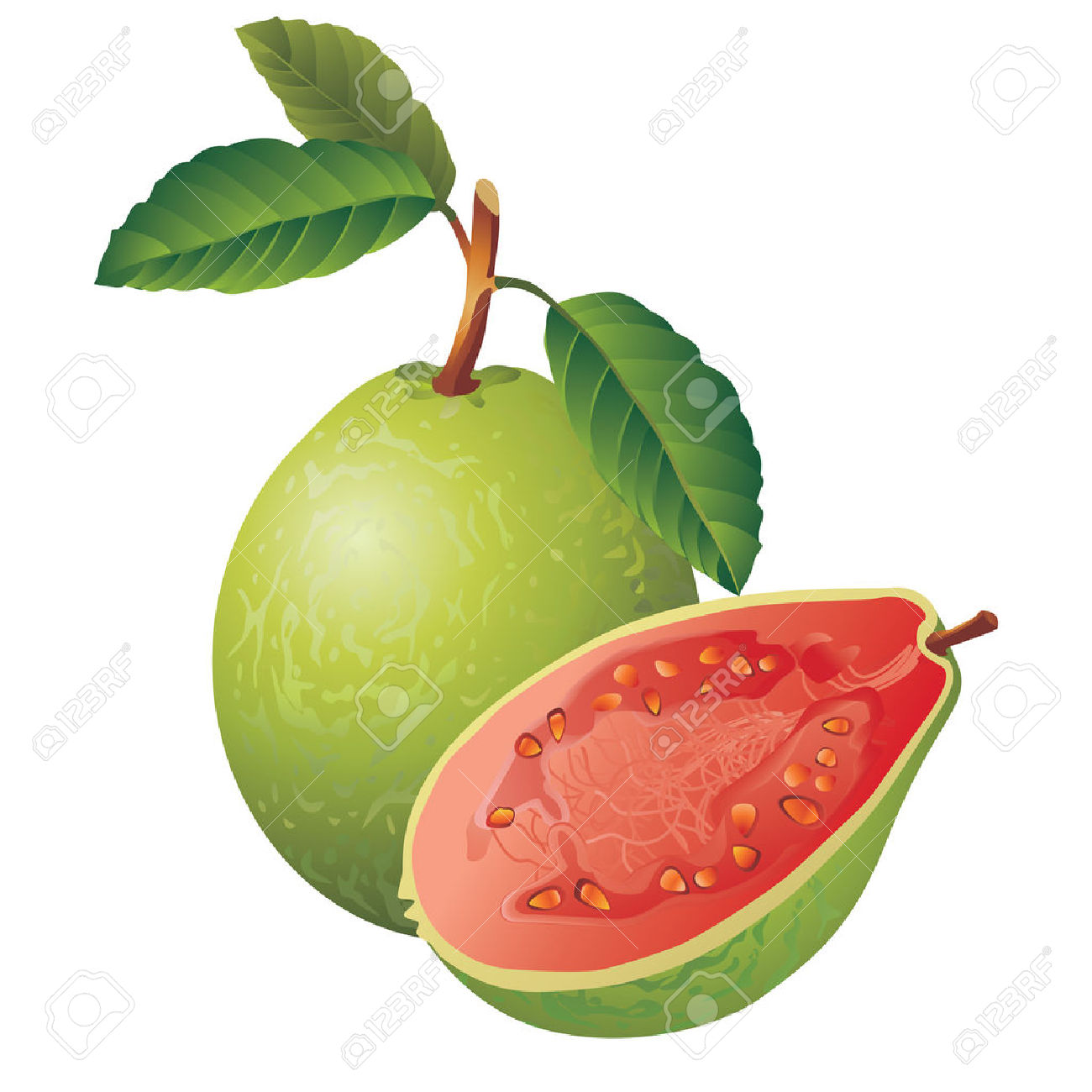 Vector Image Of A Guava Royalty Free Cliparts, Vectors, And Stock.