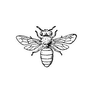 Pin by Daria Konitz on Bee Bee.
