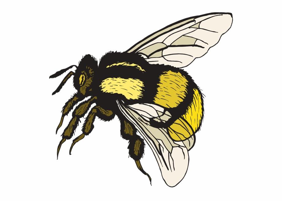 Bumble Bee Cute Bee An A Cute Clipart.