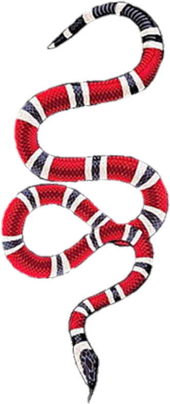 Collection of 14 free Gucci snake png aztec clipart vintage.