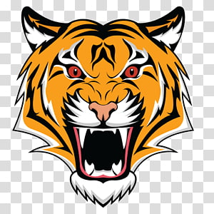 Bengal tiger PNG clipart images free download.
