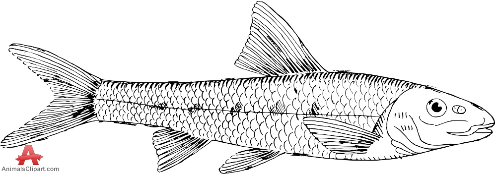 Gudgeon Fish Drawing Clipart.