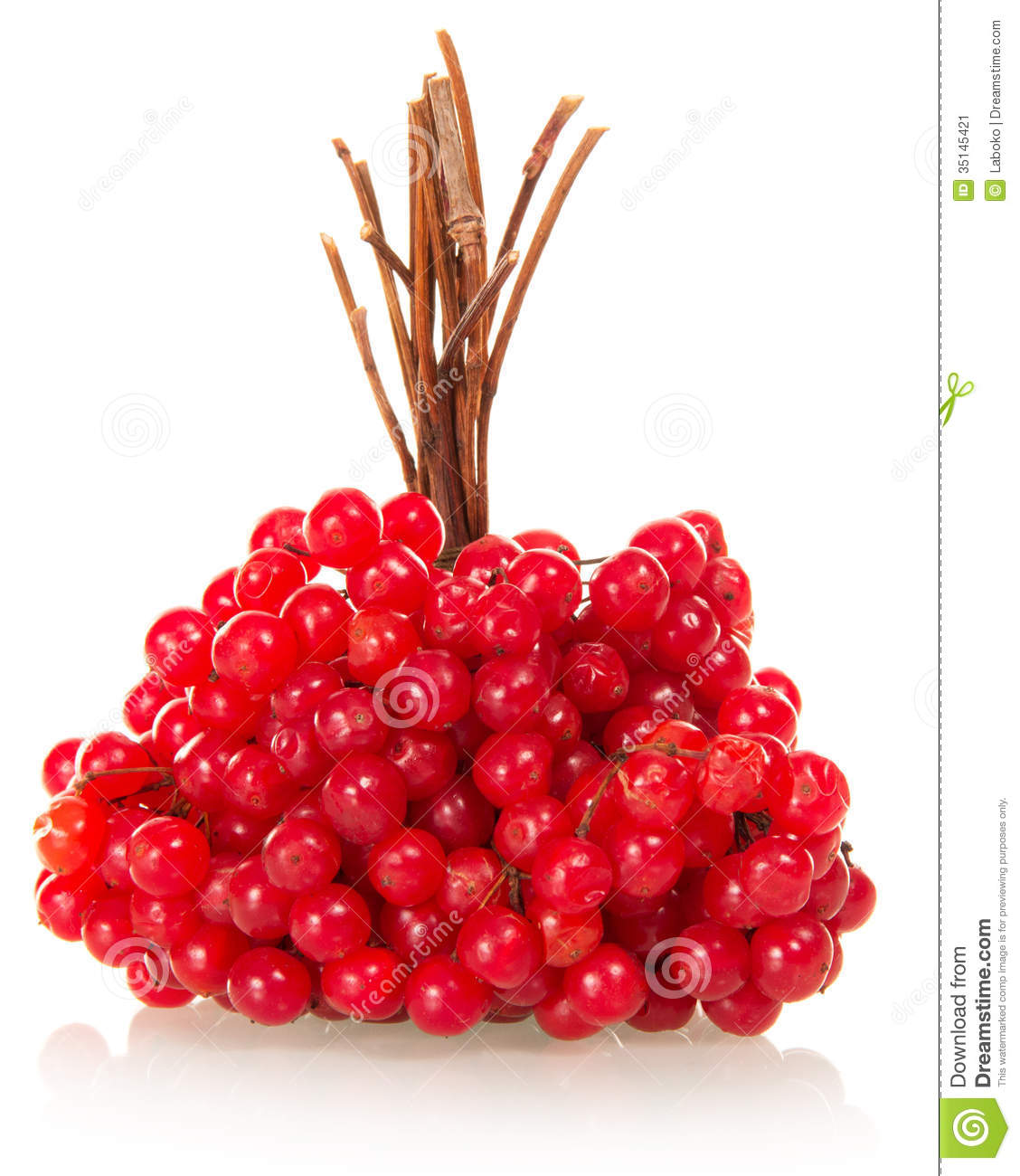 Linking Of Berries A Guelder.