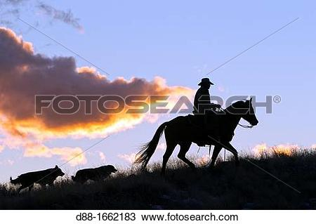 Stock Photo of Cowboy, The Hideout Guest Ranch, Shell, Wyoming.
