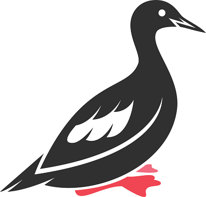 Guillemot Clip Art, Vector Images & Illustrations.