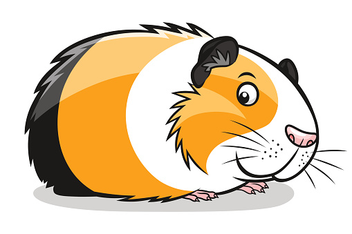 Guinea pigs related clipart 20 free Cliparts | Download ...