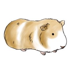 Here you'll find a selection of cartoon guinea pig products from.