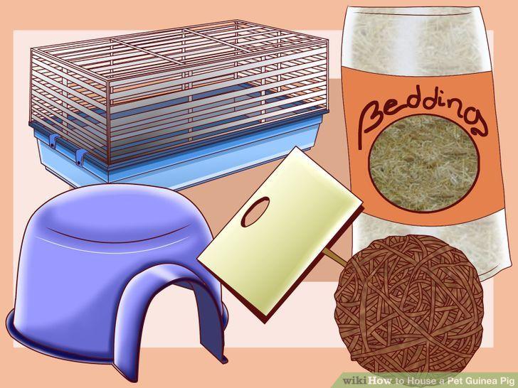 guinea pig house clipart clipground