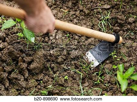 Stock Photography of Farmer using hoe, hand tool, farming, kitchen.