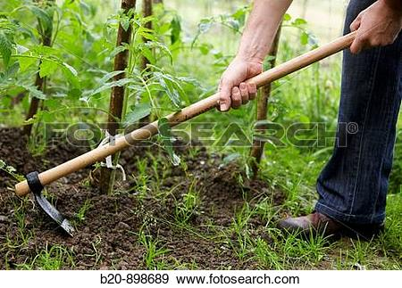Stock Photograph of Farmer using hoe, hand tool, farming, kitchen.