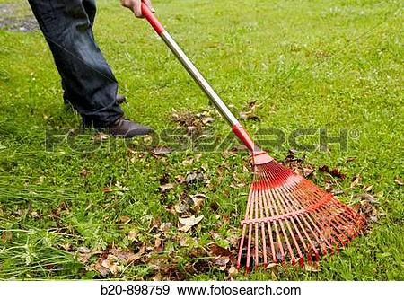 Stock Photograph of Using sweep rake to pull and collect leaves.